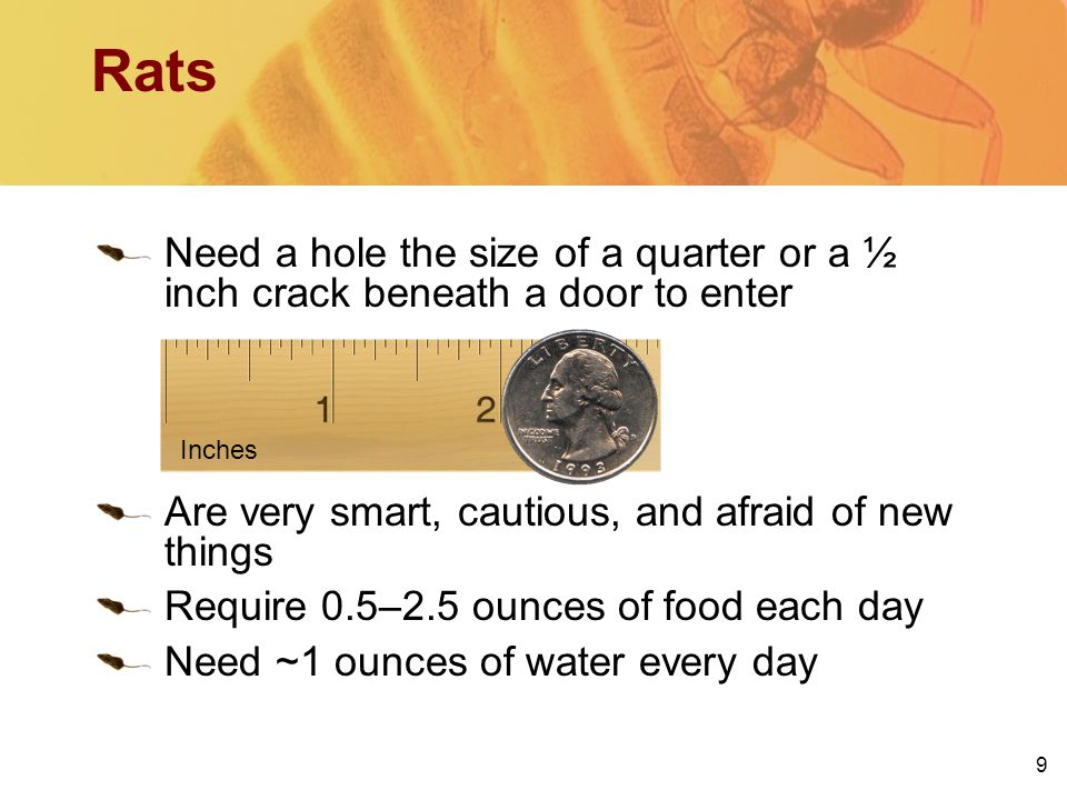 Need a hole the size of a quarter or a ½ inch crack beneath a door to enter Are very smart, cautious, and afraid of new things Require 0.5–2.5 ounces
