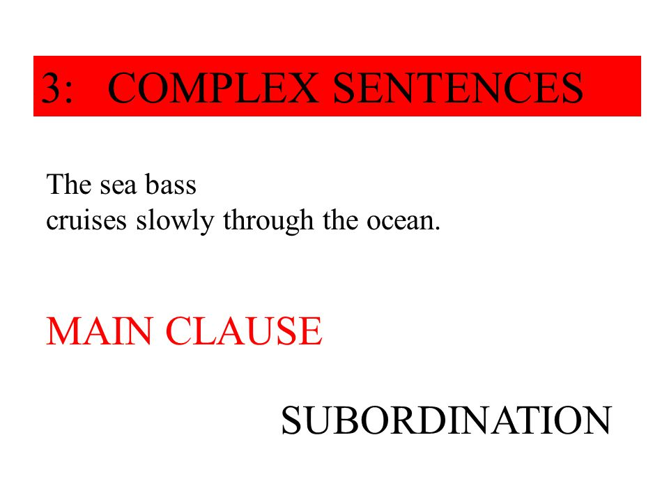 The sea bass, which was filmed two days ago, cruises slowly through the ocean. SUBORDINATION 3: COMPLEX SENTENCES MAIN CLAUSE
