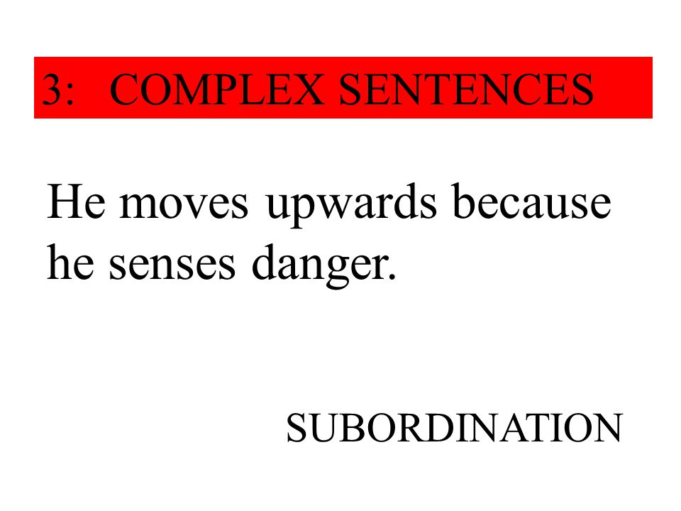 He moves upwards because he senses danger. SUBORDINATION 3: COMPLEX SENTENCES