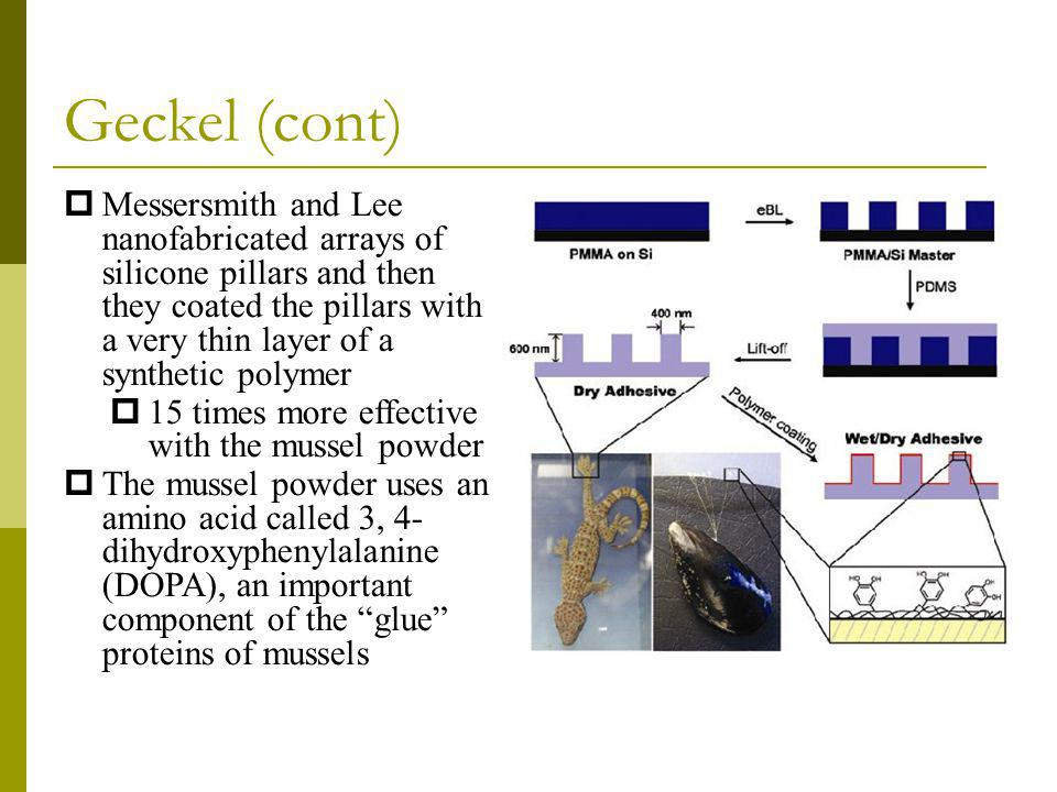 Geckel (cont) Messersmith and Lee nanofabricated arrays of silicone pillars and then they coated the pillars with a very thin layer of a synthetic pol
