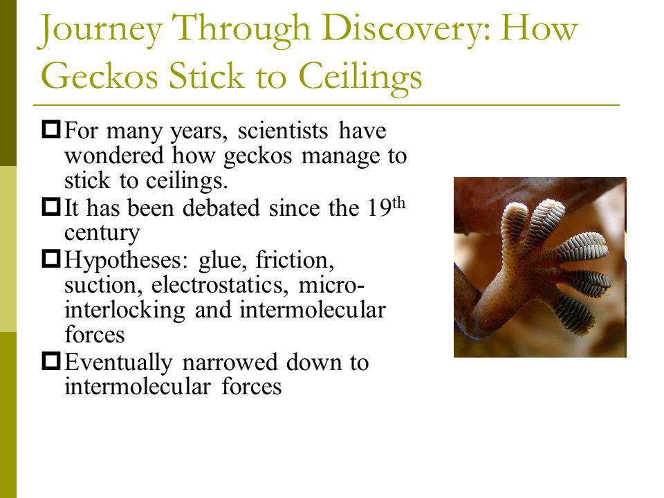 Journey Through Discovery: How Geckos Stick to Ceilings For many years, scientists have wondered how geckos manage to stick to ceilings. It has been d