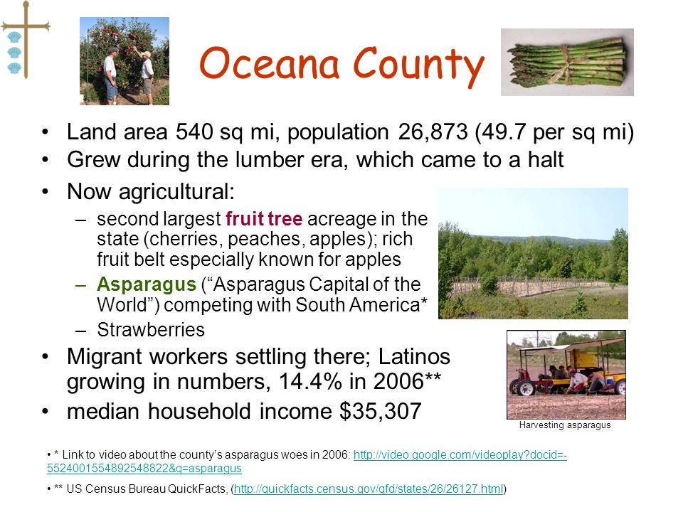 Oceana County Land area 540 sq mi, population 26,873 (49.7 per sq mi) Grew during the lumber era, which came to a halt * Link to video about the countys asparagus woes in 2006: http://video.google.com/videoplay?docid=- 5524001554892548822&q=asparagushttp://video.google.com/videoplay?docid=- 5524001554892548822&q=asparagus ** US Census Bureau QuickFacts, (http://quickfacts.census.gov/qfd/states/26/26127.html)http://quickfacts.census.gov/qfd/states/26/26127.html Now agricultural: –second largest fruit tree acreage in the state (cherries, peaches, apples); rich fruit belt especially known for apples –Asparagus (Asparagus Capital of the World) competing with South America* –Strawberries Migrant workers settling there; Latinos growing in numbers, 14.4% in 2006** median household income $35,307 Harvesting asparagus