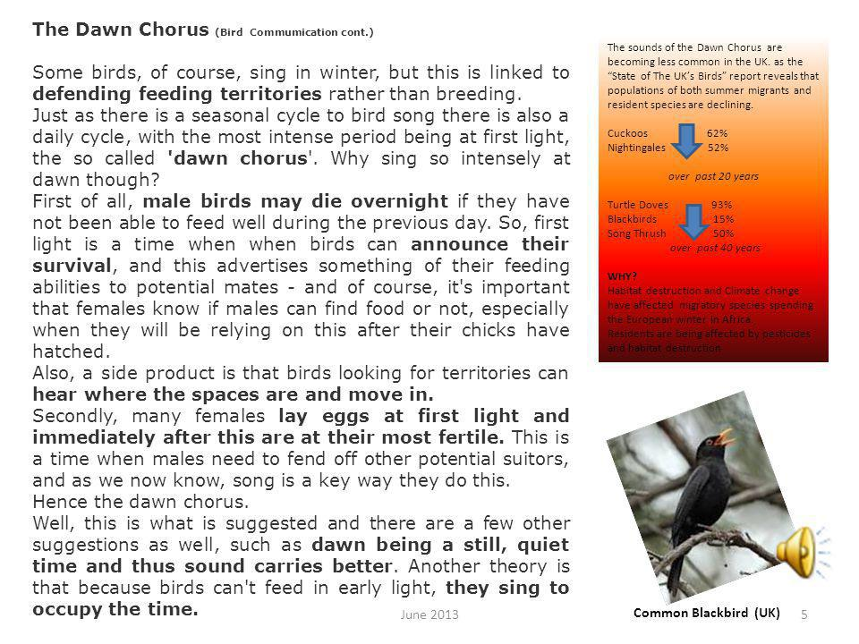 Theme tunes (Bird Commumication cont.) Each species has its own signature song, each song is different, because, first of all it has to identify the singer s species.