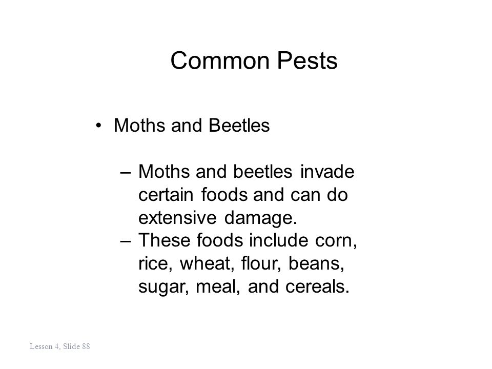 Common Pests Moths and Beetles –Moths and beetles invade certain foods and can do extensive damage.