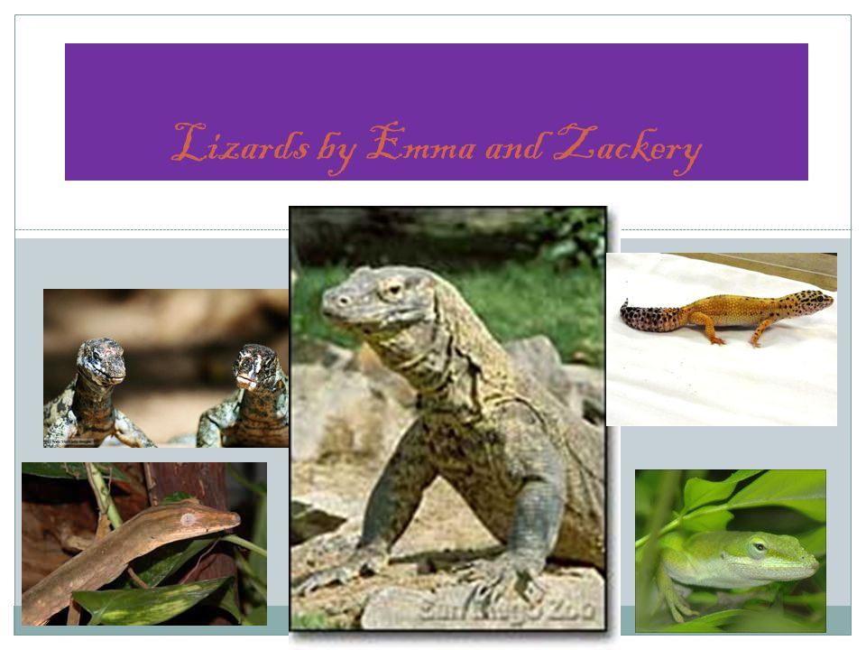 Lizards by Emma and Zackery