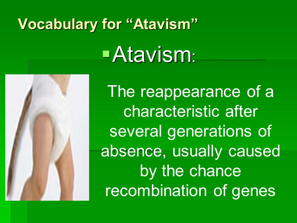 Vocabulary for Atavism Atavism : Atavism : The reappearance of a characteristic after several generations of absence, usually caused by the chance rec