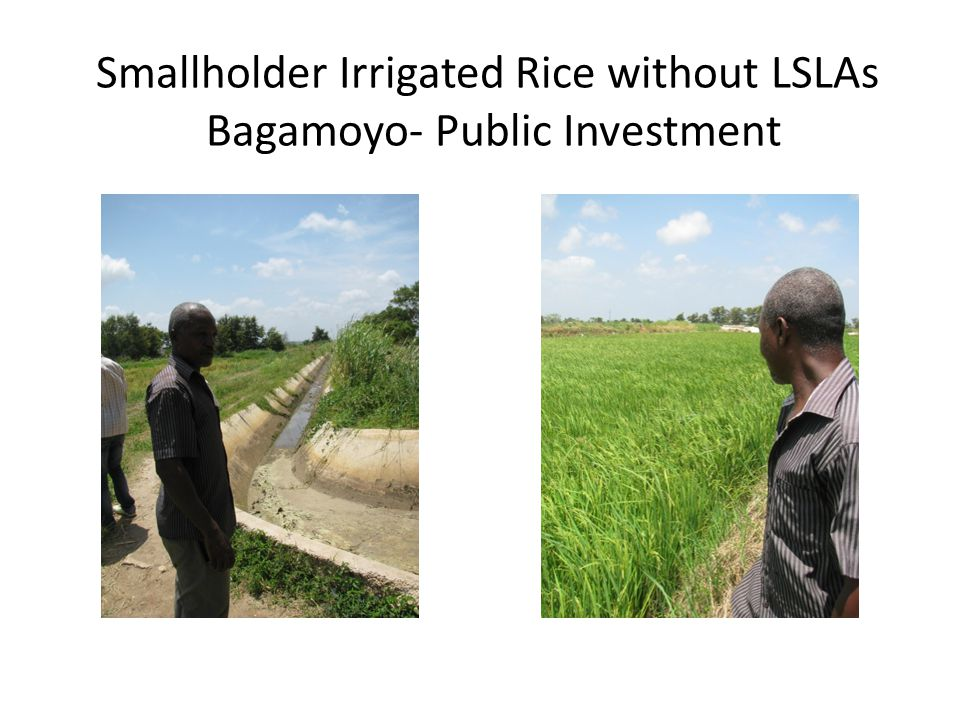 Smallholder Irrigated Rice without LSLAs Bagamoyo- Public Investment