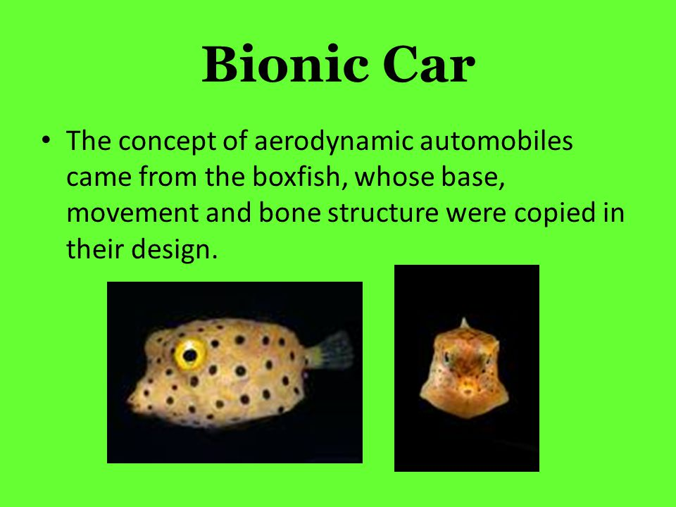 Bionic Car The concept of aerodynamic automobiles came from the boxfish, whose base, movement and bone structure were copied in their design.