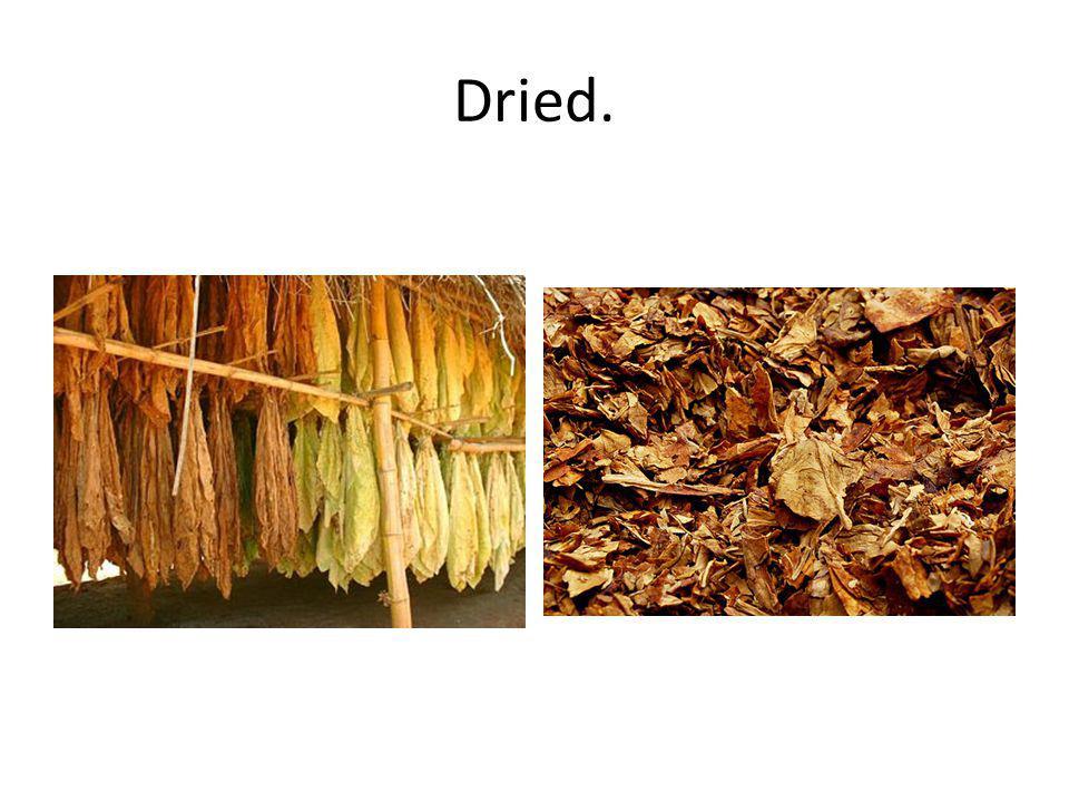 Dried.