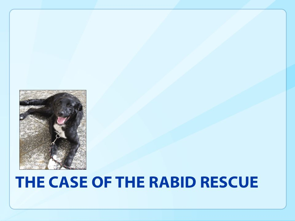 THE CASE OF THE RABID RESCUE