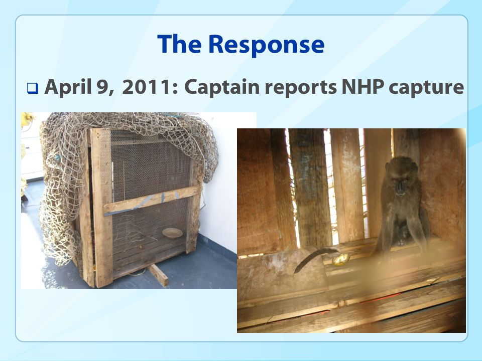 The Response April 9, 2011: Captain reports NHP capture