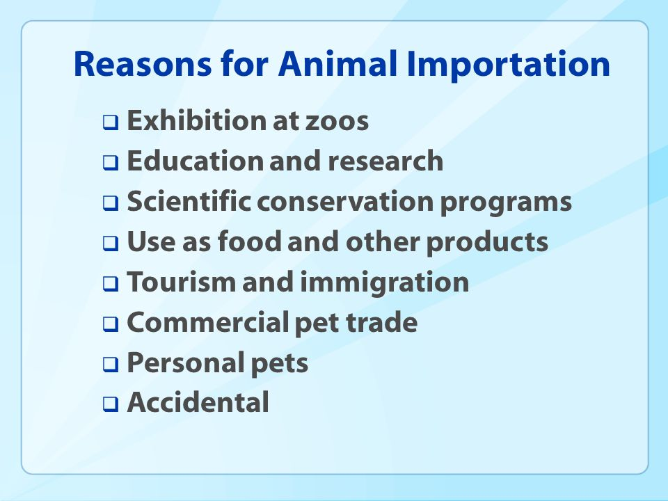 Reasons for Animal Importation Exhibition at zoos Education and research Scientific conservation programs Use as food and other products Tourism and immigration Commercial pet trade Personal pets Accidental