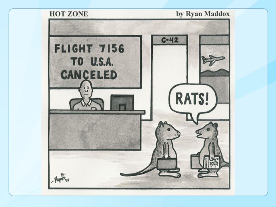 Environmental Assessment No evidence of bats or bat droppings Airport animal incident record review 5 bats identified during 2011 Airplane doors kept open overnight Holes in the ceiling where jetway meets terminal Jetway canopy folds likely hiding place