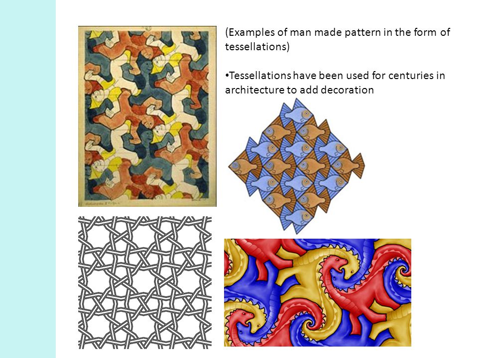Tessellation patterns in Nature Can you guess where these patterns come from?