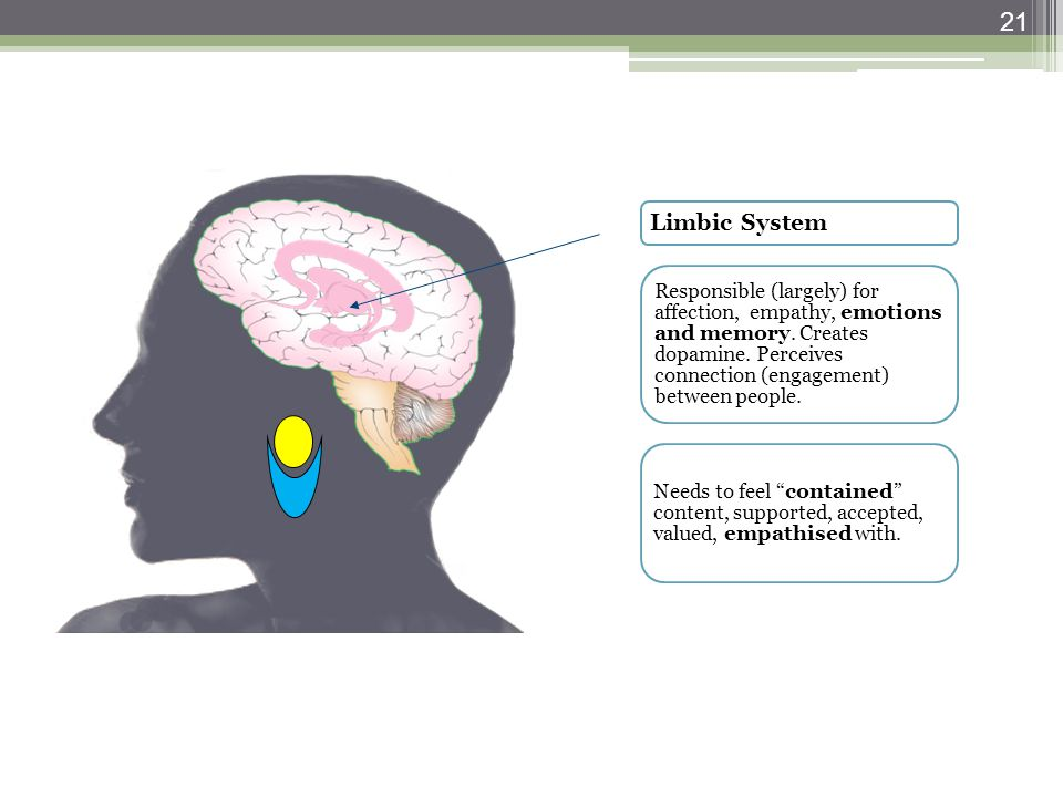 Limbic System Responsible (largely) for affection, empathy, emotions and memory. Creates dopamine. Perceives connection (engagement) between people. N