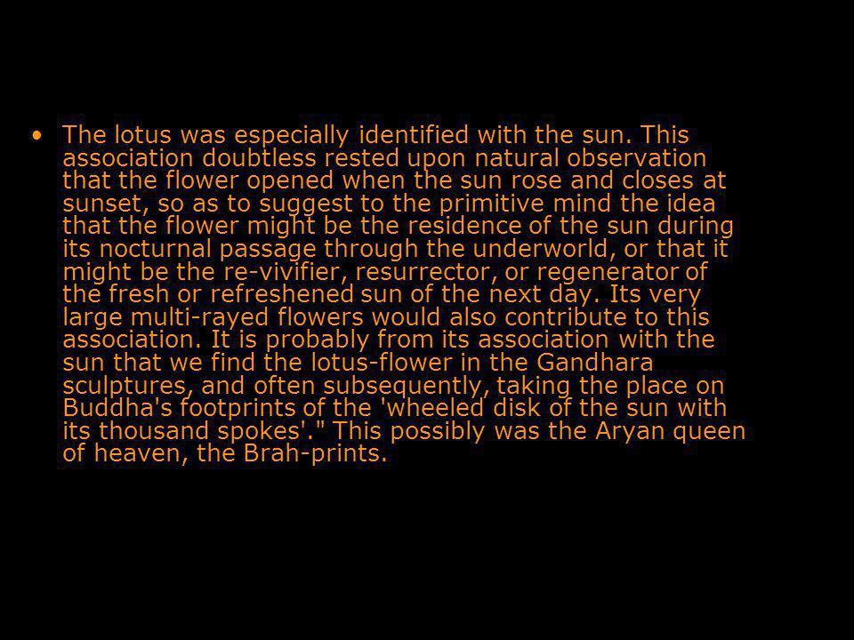 The lotus was especially identified with the sun.