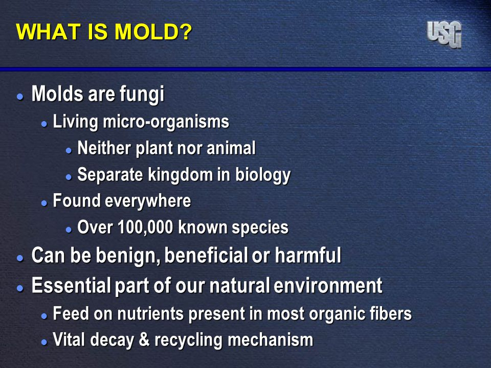 WHAT IS MOLD? l Molds are fungi l Living micro-organisms l Neither plant nor animal l Separate kingdom in biology l Found everywhere l Over 100,000 kn