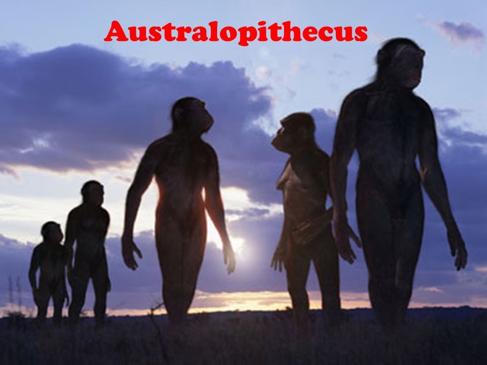 Hominids The human family is defined as Hominids. Hominids are characterized by several features, such as their manner of movement. We have an upright