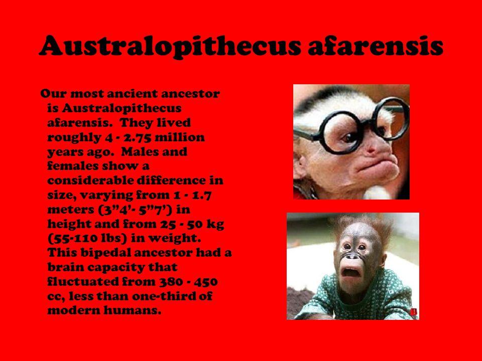 Australopithecus afarensis Our most ancient ancestor is Australopithecus afarensis.