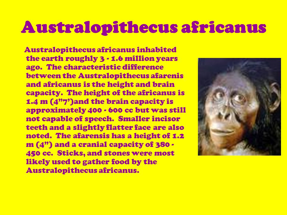 Australopithecus africanus inhabited the earth roughly 3 - 1.6 million years ago.