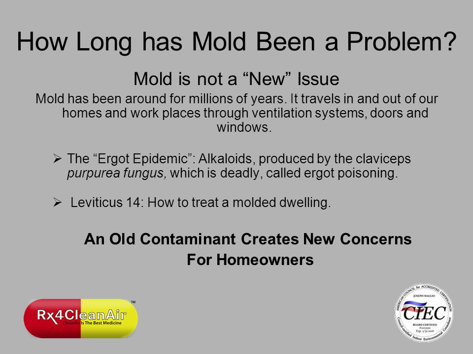 How Long has Mold Been a Problem.