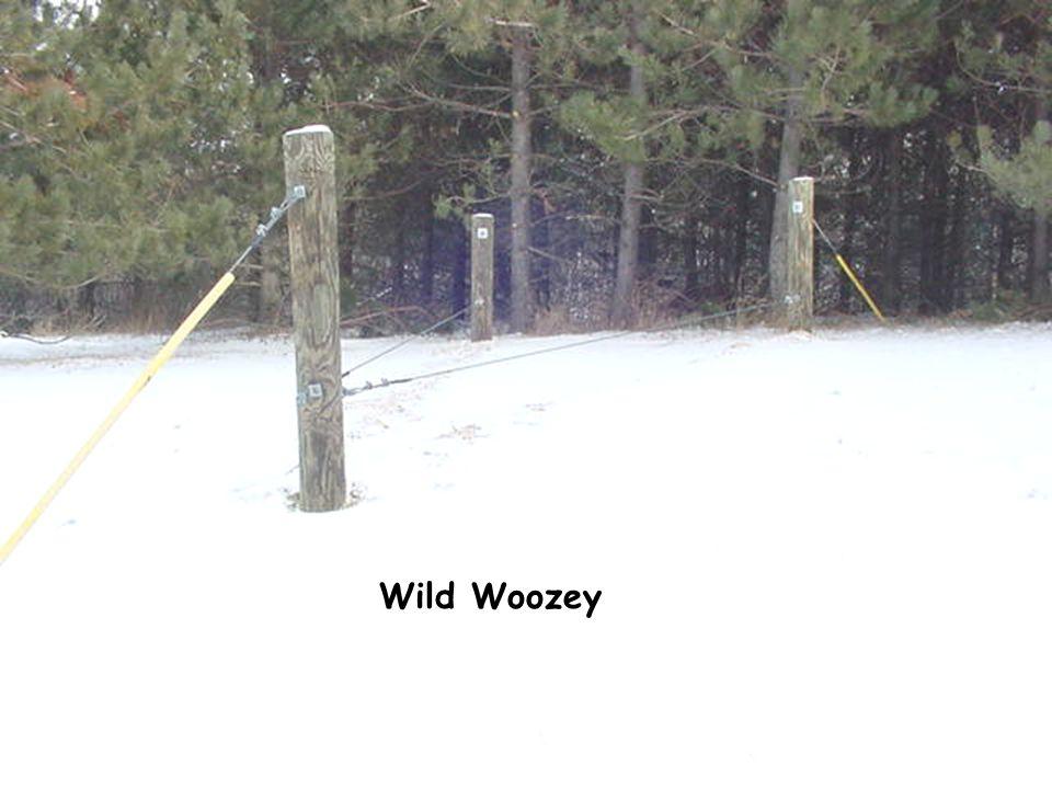 Wild Woozey