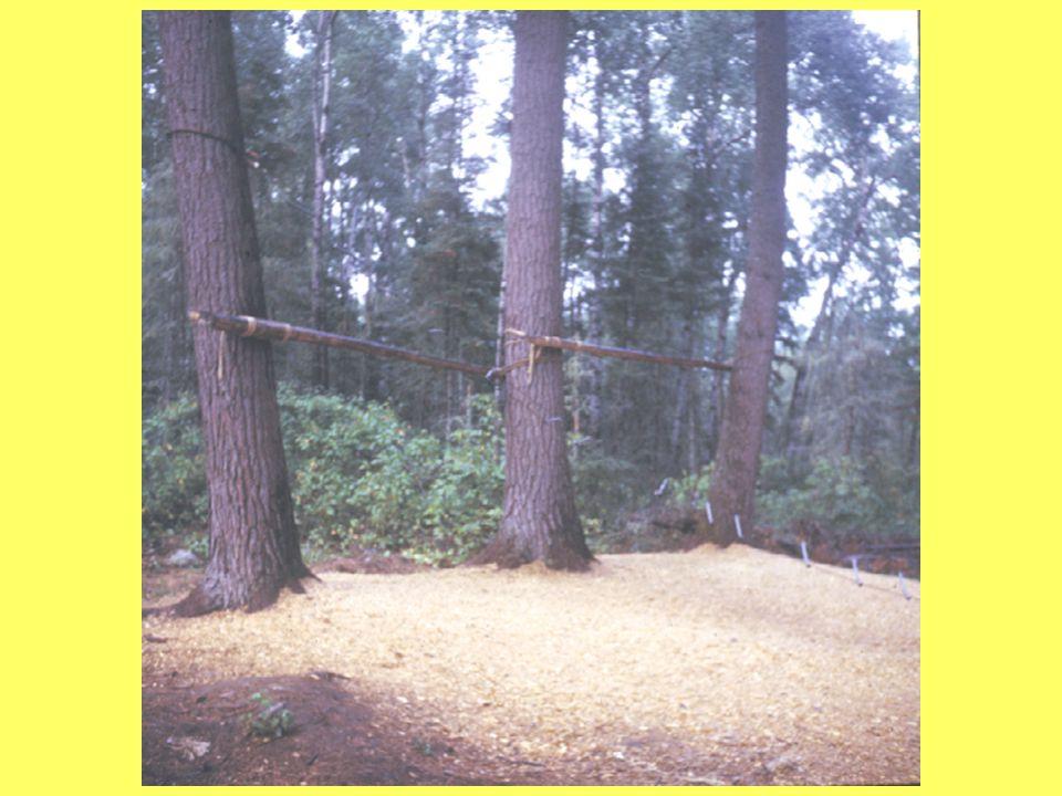 Climbing Wall Cat Walk or Beam Zip Wire