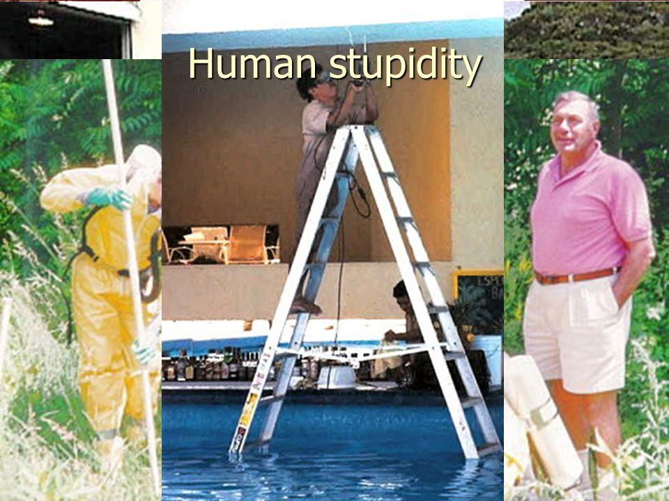 31 Human stupidity
