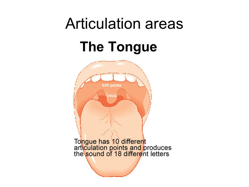 Articulation areas The Tongue