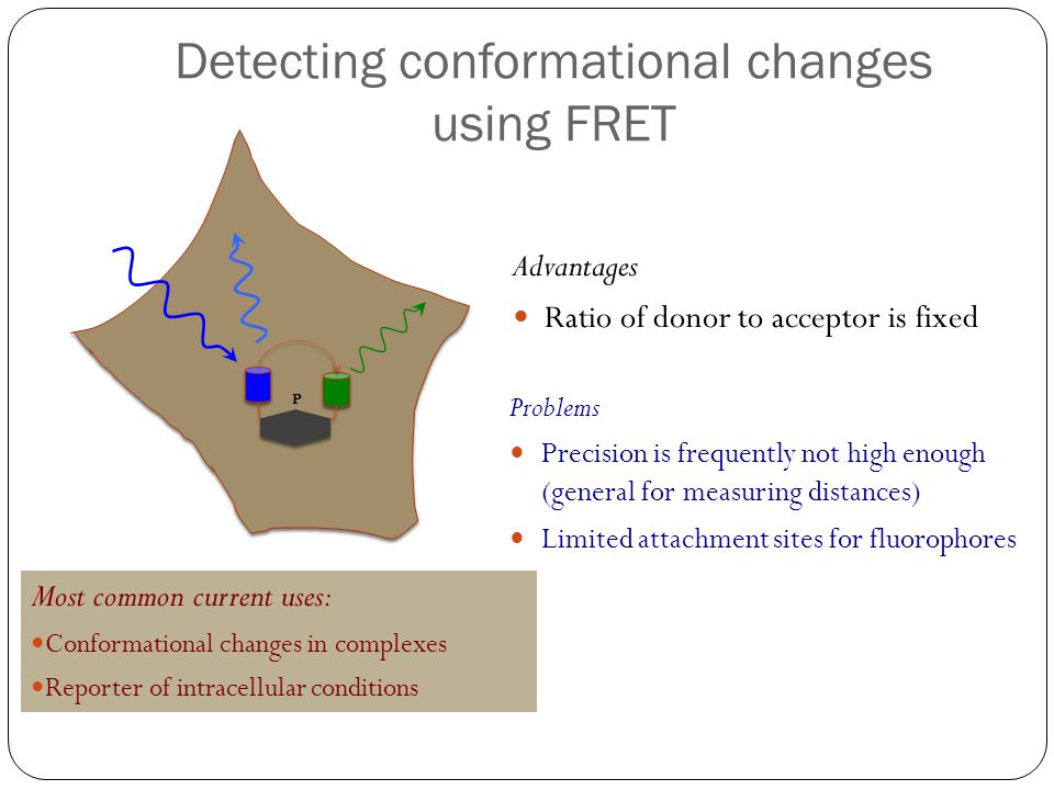 Detecting conformational changes using FRET P Problems Precision is frequently not high enough (general for measuring distances) Limited attachment si