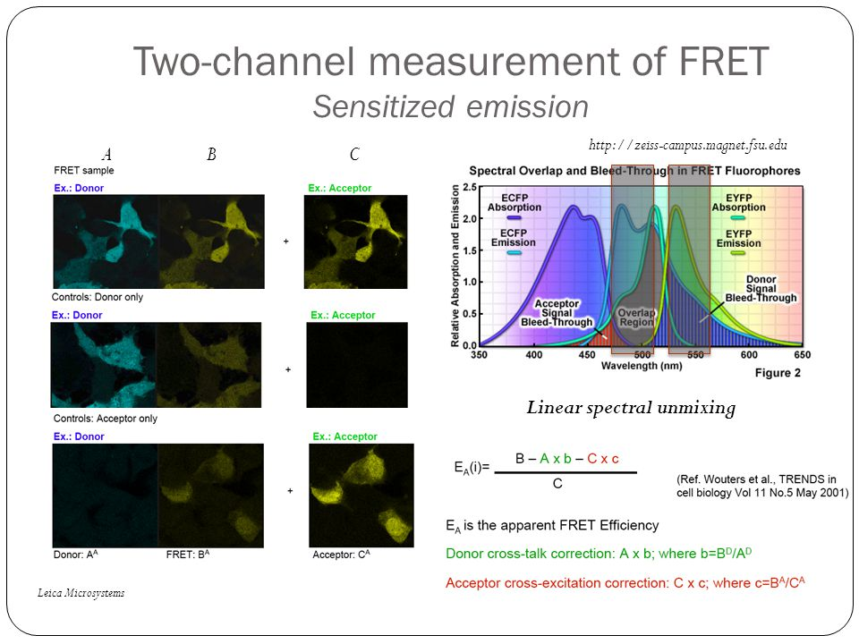 Two-channel measurement of FRET Sensitized emission Leica Microsystems http://zeiss-campus.magnet.fsu.edu Linear spectral unmixing ABC