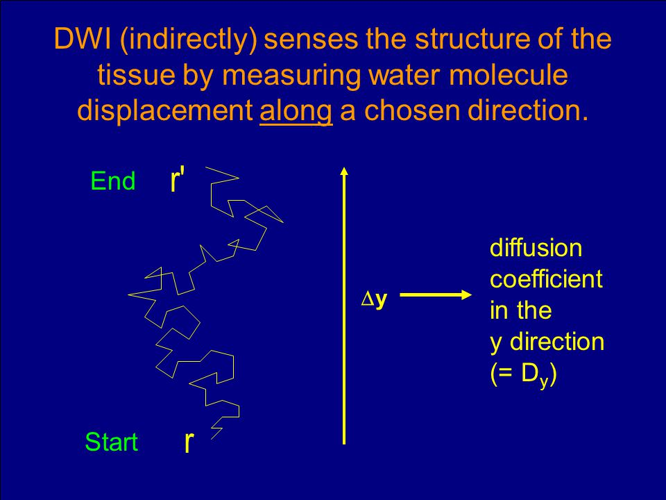 Slide 20 DWI (indirectly) senses the structure of the tissue by measuring water molecule displacement along a chosen direction. r r' y diffusion coeff
