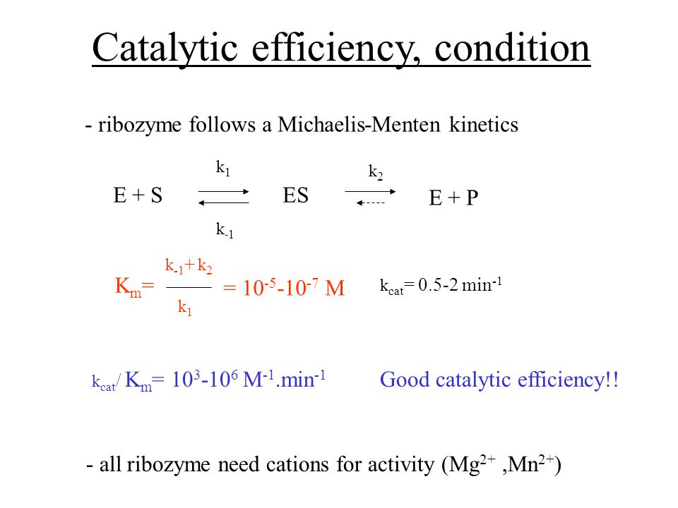 Catalytic efficiency, condition - ribozyme follows a Michaelis-Menten kinetics E + SES E + P k1k1 k2k2 k-1k-1 - all ribozyme need cations for activity (Mg 2+,Mn 2+ ) Km=Km= k -1 + k 2 k1k1 = M k cat = min -1 k cat / K m = M -1.min -1 Good catalytic efficiency!!