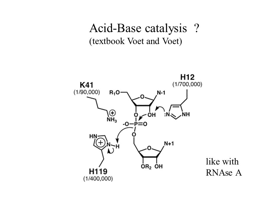 Acid-Base catalysis (textbook Voet and Voet) like with RNAse A