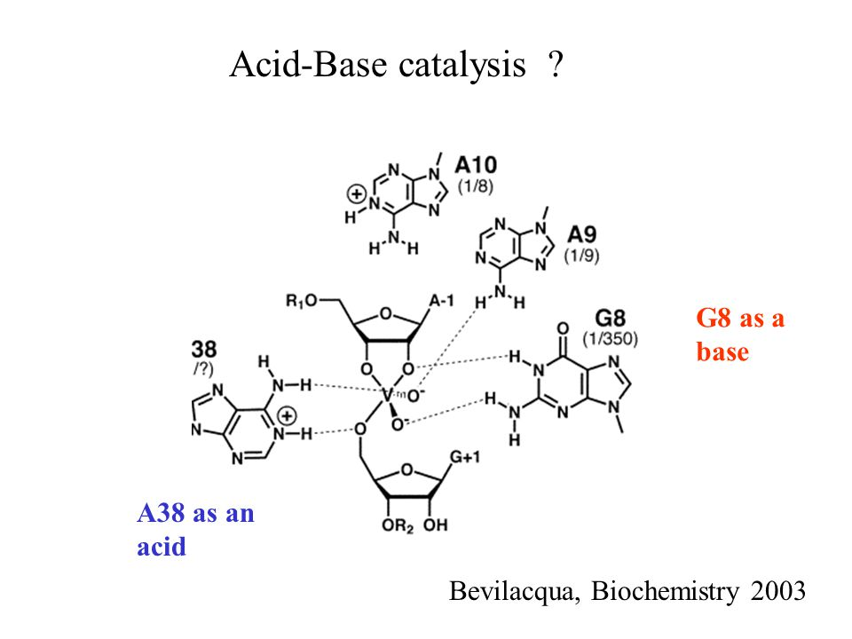 Acid-Base catalysis ? G8 as a base A38 as an acid Bevilacqua, Biochemistry 2003