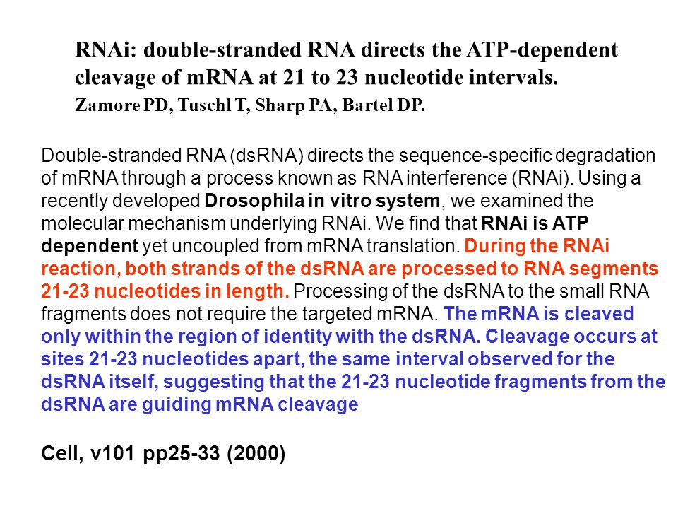 RNAi: double-stranded RNA directs the ATP-dependent cleavage of mRNA at 21 to 23 nucleotide intervals. Zamore PD, Tuschl T, Sharp PA, Bartel DP. Doubl