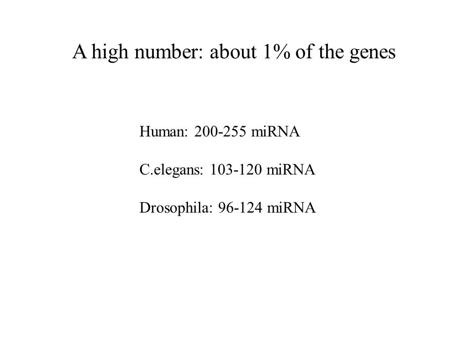 A high number: about 1% of the genes Human: miRNA C.elegans: miRNA Drosophila: miRNA