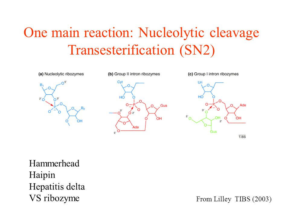 In vitro selection of RNA molecules that bind specific ligands Andrew D.