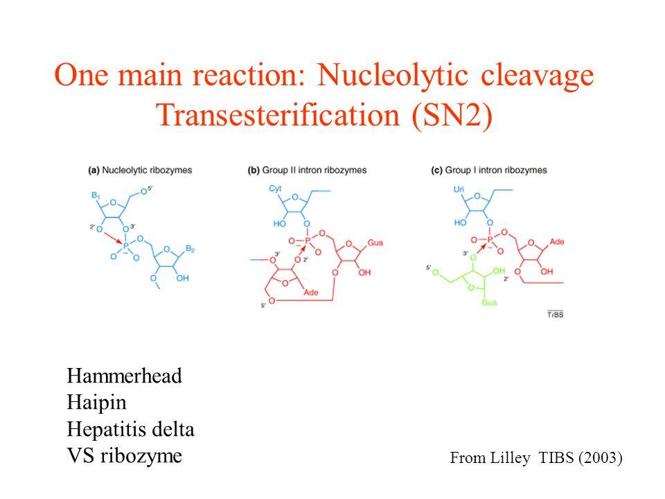 Lentivirus-Based Approach: shRNA-expressing vector Rubinson, Nat Genet.