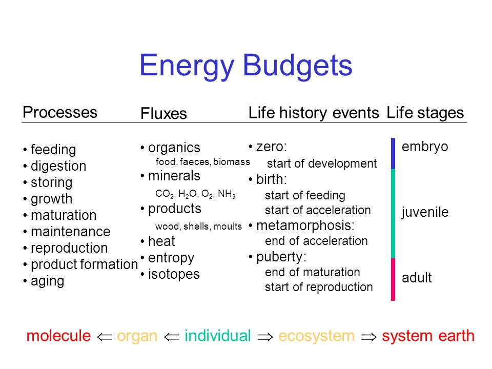 Energy Budgets Processes feeding digestion storing growth maturation maintenance reproduction product formation aging Life history events zero: start