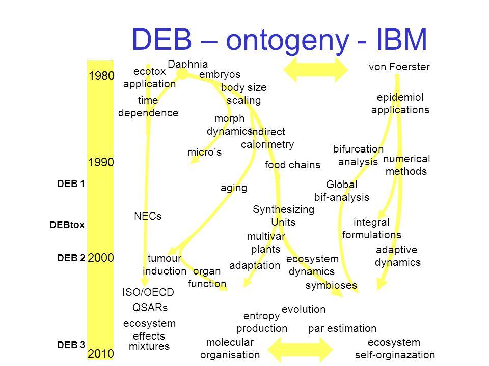DEB – ontogeny - IBM 1980 1990 2000 Daphnia ISO/OECD von Foerster molecular organisation DEB 1 DEB 2 DEBtox NECs embryos body size scaling morph dynam