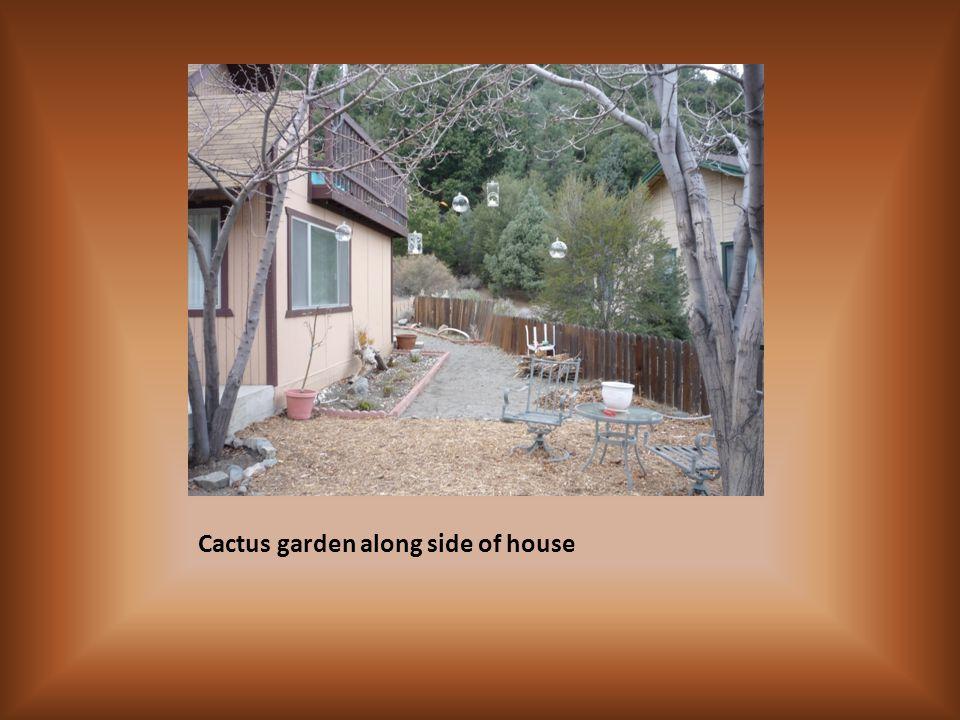 Cactus garden along side of house