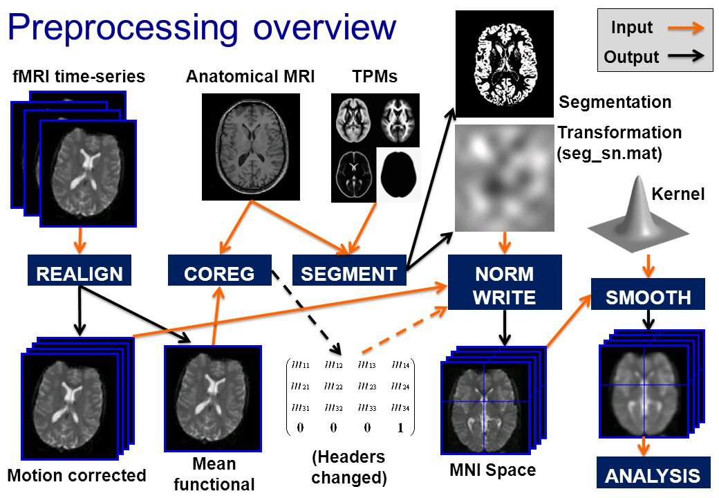 Preprocessing overview fMRI time-series Motion corrected Mean functional REALIGNCOREG Anatomical MRI SEGMENT NORM WRITE SMOOTH TPMs ANALYSIS Input Out