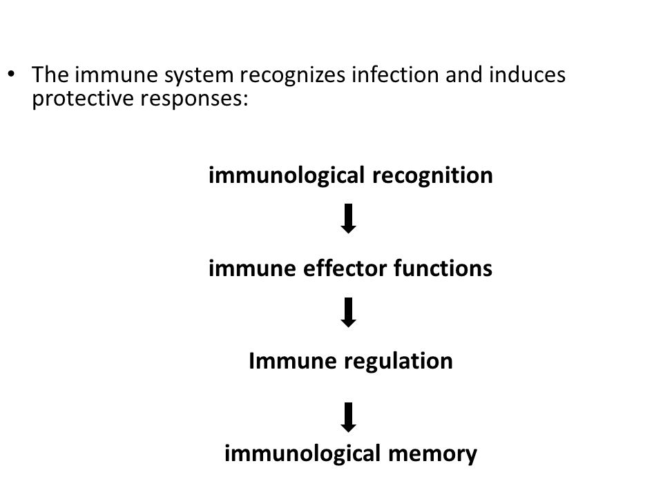 The immune system recognizes infection and induces protective responses: immunological recognition immune effector functions Immune regulation immunol