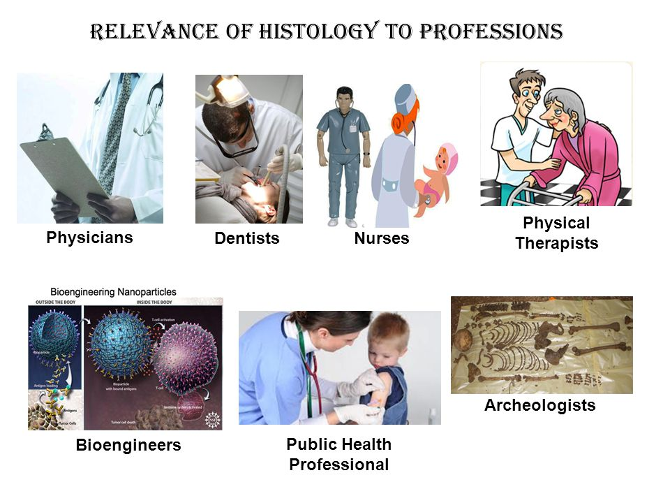 Relevance of Histology to Professions Physicians Nurses Dentists Bioengineers Physical Therapists Public Health Professional Archeologists