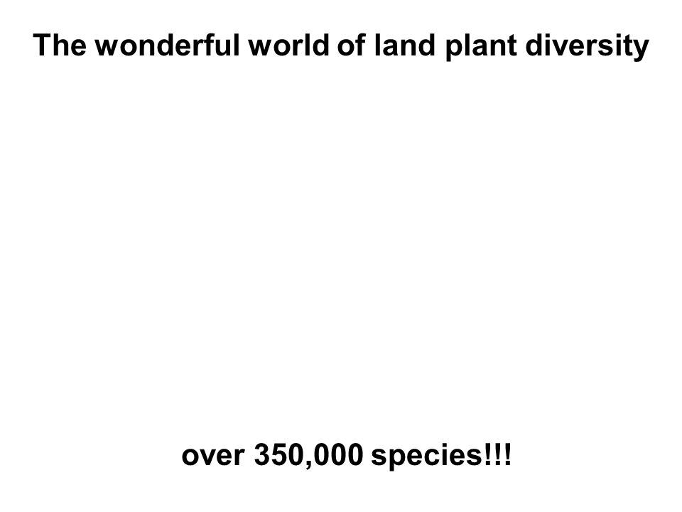 The wonderful world of land plant diversity over 350,000 species!!!
