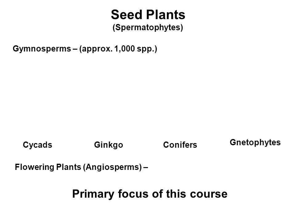 over 300,000 species of angiosperms The wonderful world of land plant diversity