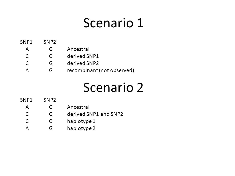 Scenario 1 SNP1SNP2 A CAncestral C Cderived SNP1 C Gderived SNP2 A Grecombinant (not observed) Scenario 2 SNP1SNP2 A CAncestral C Gderived SNP1 and SN