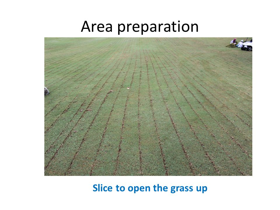 Area preparation Slice to open the grass up