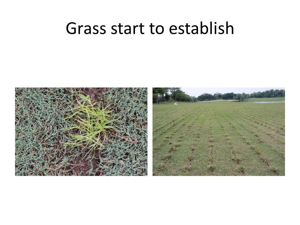 Grass start to establish